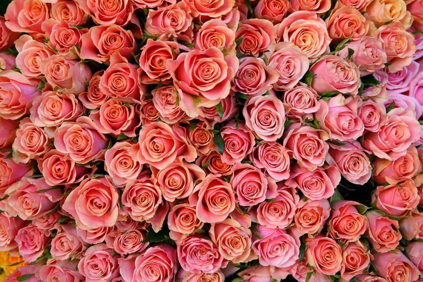 Bild Hochzeits Blumen Rosen