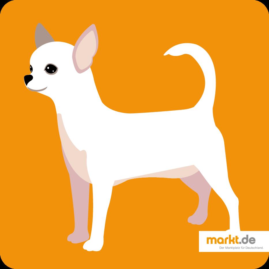 Grafik Chihuahua