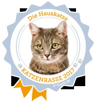 Hauskatze ist Katzenrasse des Jahres 2017