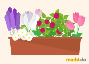 balkonpflanzen für jede saison | markt.de, Garten ideen gestaltung