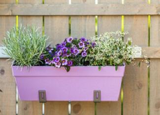 balkonpflanzen für jede saison   markt.de, Hause und garten